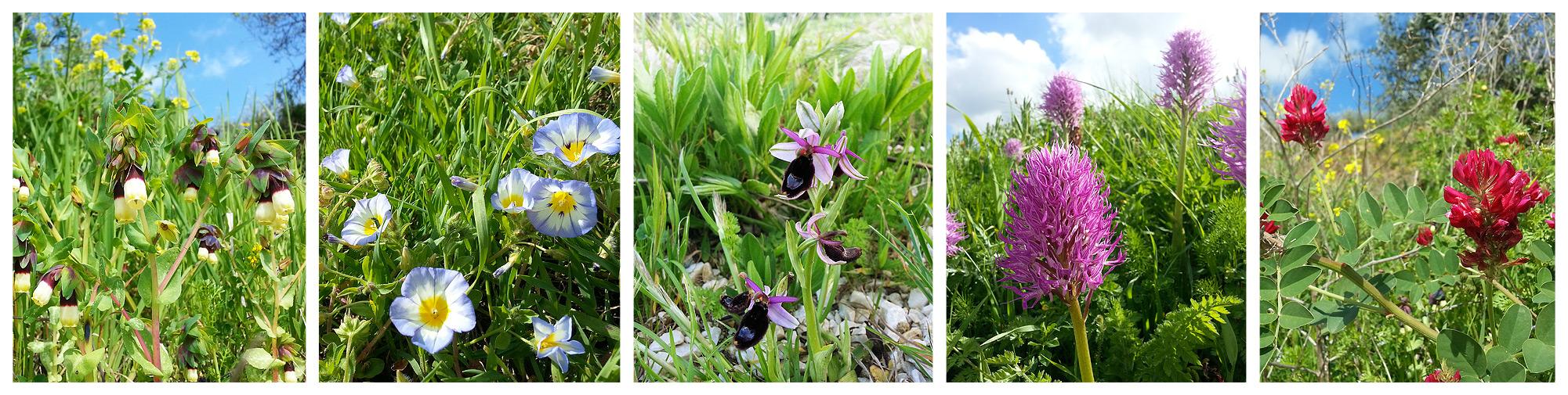 Enkele van de vele bloemsoorten die in de maand april in bloei staan