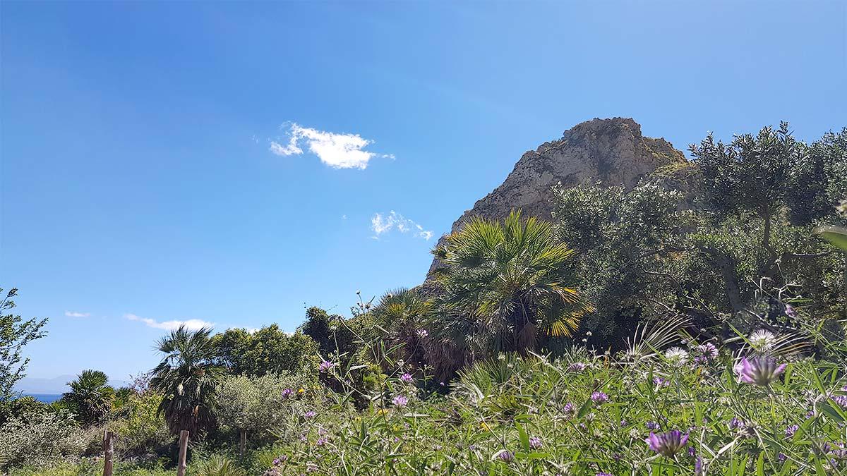 Een bloemenveld op de heuvelachtige kust