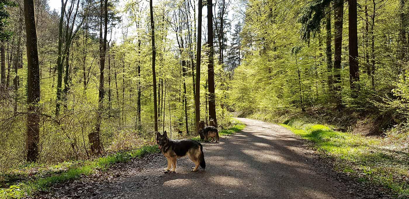In het bos in Freiburg